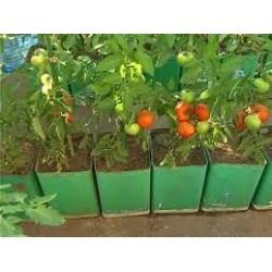 домати различни сортове розови,червени,