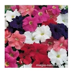 Петуния микс (Petunia mix )